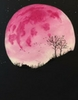 Pink Moon Paint Party!  Who will win a free class tonight ?